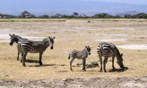 А вы были на сафари в Кении?