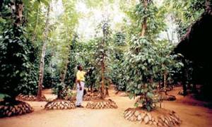 Шри-Ланка - лучшее место для отдыха