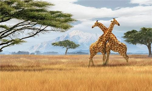 ЮАР открыта туристам со всего мира