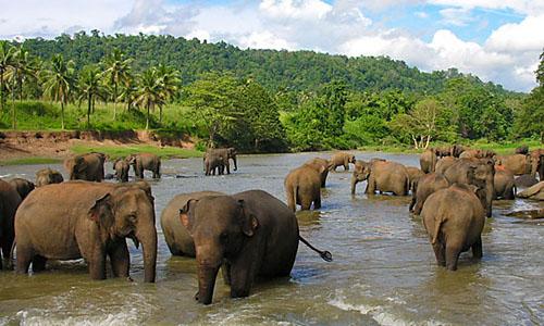 Шри-ЛанкаОтдых и экотуры круглый год